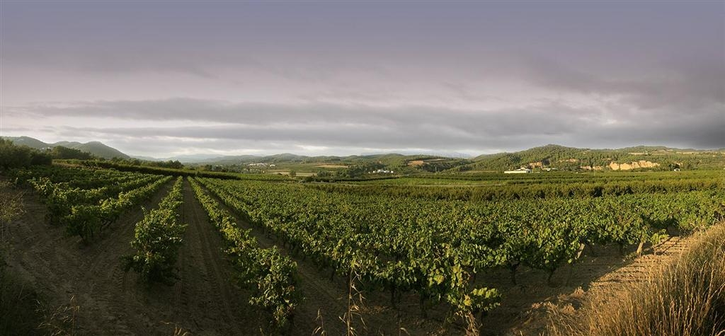 Les vinyes Torrens FOTO: Anoiaturisme