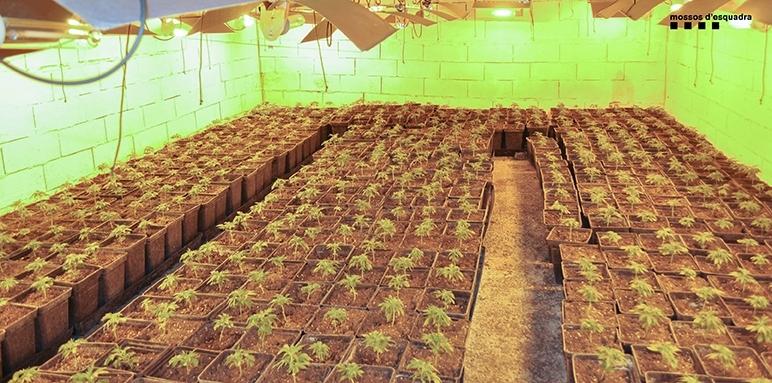 Una de les plantacions intervingudes