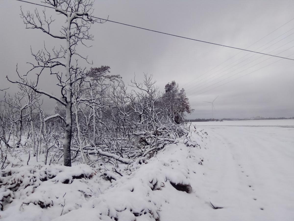 Imatges de ple hivern a Pujalt FOTO: Observatori de Pujalt