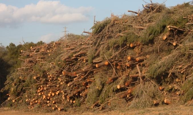 Les primeres tales d'arbres atien la polèmica