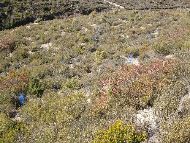 Plantada d'arbres a Jorba. Foto: Xavier Barberà