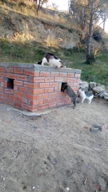 La presència de gats a Vallbona es posarà sota control