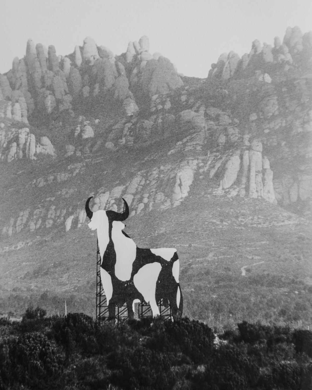 El 'Toru' dels artistes igualadins: convertit en vaca FOTO: R. Velàzquez