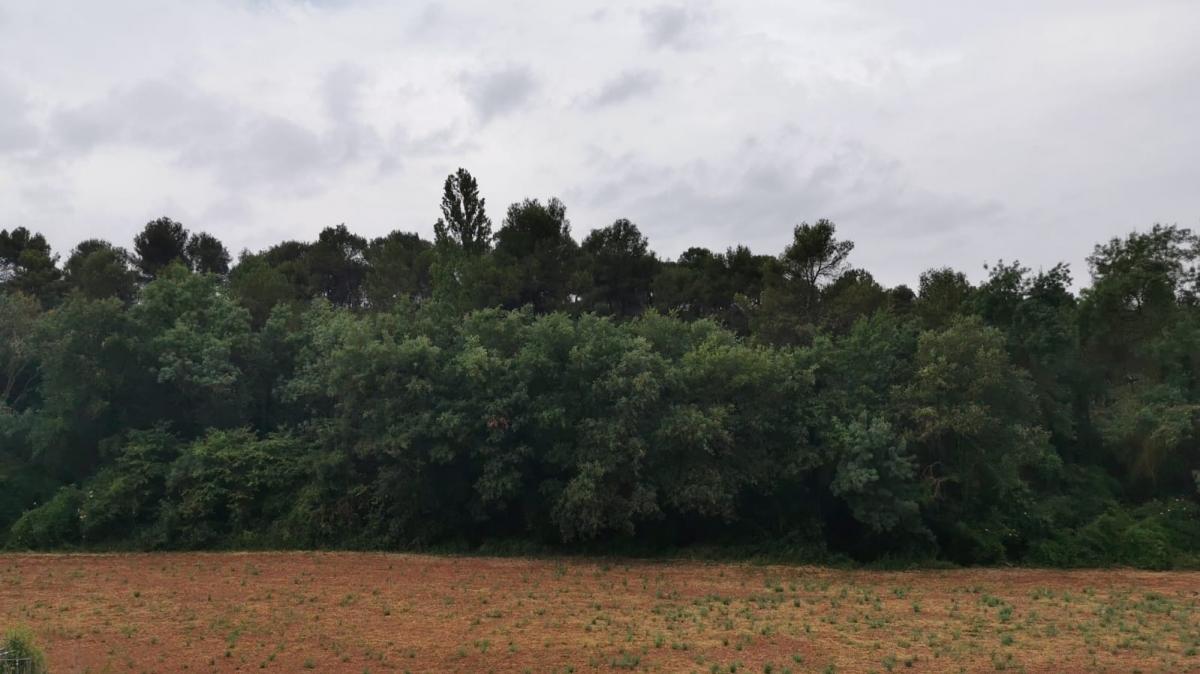 Una de les zones pròximes a Copons on s'implantarien els aerogeneradors